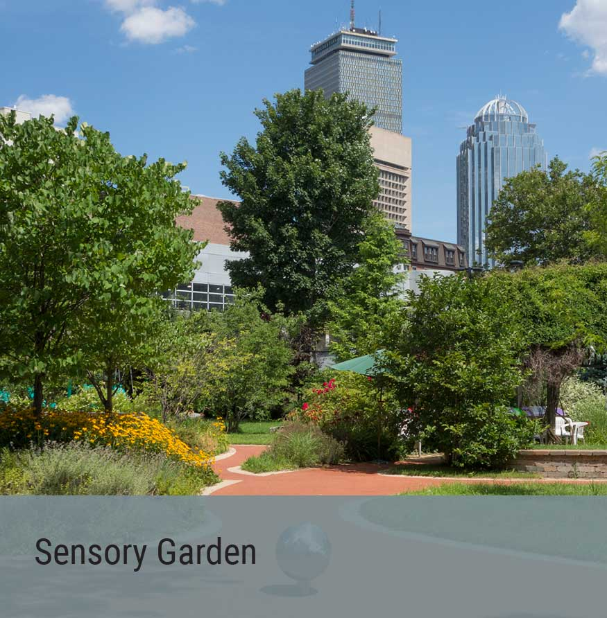 Special Project - Sensory Garden